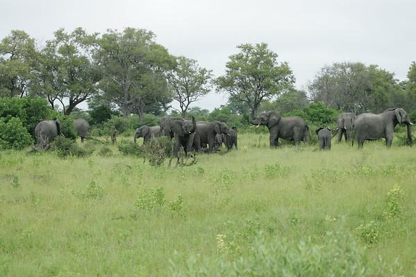 KA6P5079 Botswana, Okavanga, Game Park, Safari