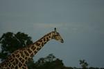 KA6P4352 Botswana, Okavanga, Game Park, Safari