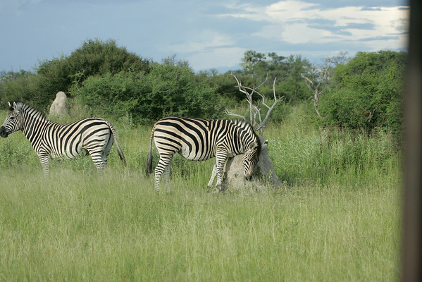 KA6P6397 Botswana, Okavanga, Game Park, Safari