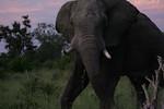 KA6P4338 Botswana, Okavanga, Game Park, Safari