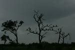 KA6P4520 Botswana, Okavanga, Game Park, Safari