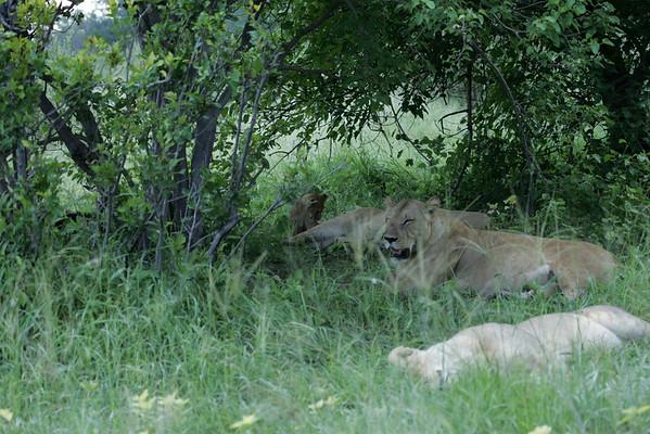 KA6P5955 Botswana, Okavanga, Game Park, Safari