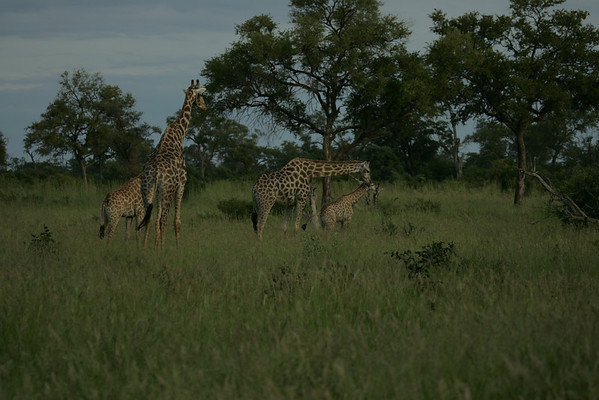 KA6P4359 Botswana, Okavanga, Game Park, Safari