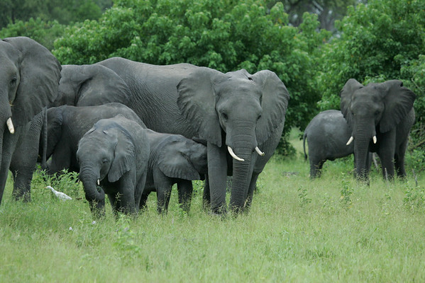 KA6P5114 Botswana, Okavanga, Game Park, Safari