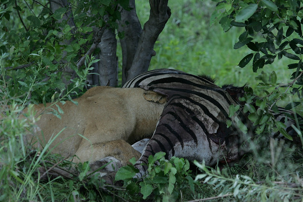 KA6P5971 Botswana, Okavanga, Game Park, Safari