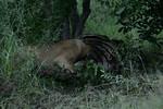 KA6P5981 Botswana, Okavanga, Game Park, Safari