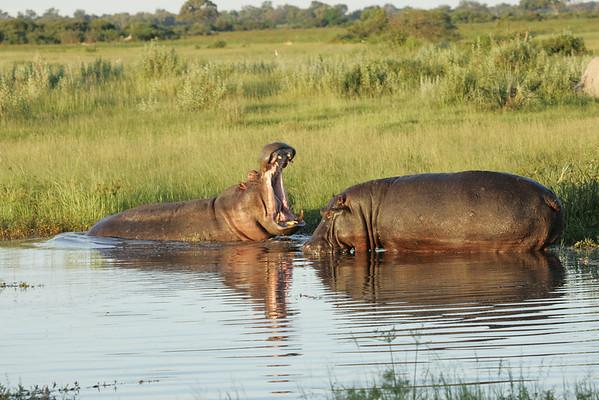 KA6P6734 Botswana, Okavanga, Game Park, Safari