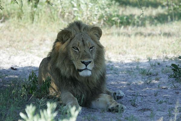 KA6P6855 Botswana, Okavanga, Game Park, Safari