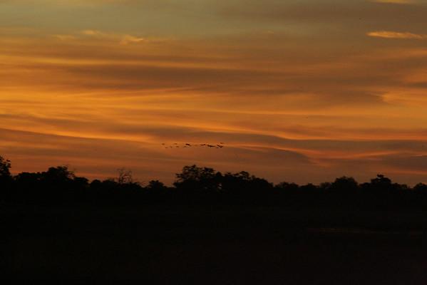 KA6P4345 Botswana, Okavanga, Game Park, Safari