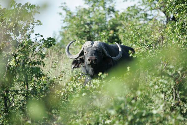 KA6P6679 Botswana, Okavanga, Game Park, Safari