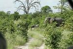 KA6P6241 Botswana, Okavanga, Game Park, Safari