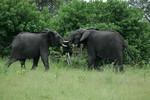 KA6P5137 Botswana, Okavanga, Game Park, Safari