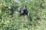 KA6P6691 Botswana, Okavanga, Game Park, Safari