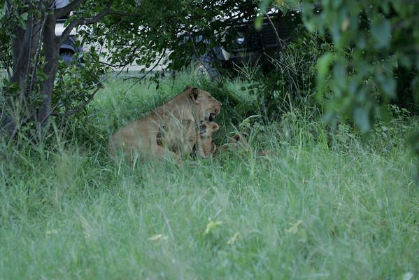 KA6P5790 Botswana, Okavanga, Game Park, Safari