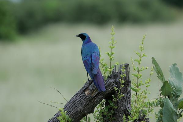 KA6P5592 Botswana, Okavanga, Game Park, Safari