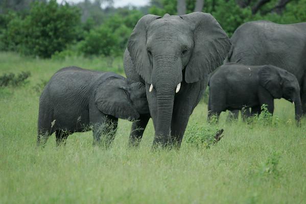KA6P5119 Botswana, Okavanga, Game Park, Safari