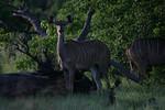 KA6P5831 Botswana, Okavanga, Game Park, Safari
