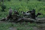 KA6P4496 Botswana, Okavanga, Game Park, Safari
