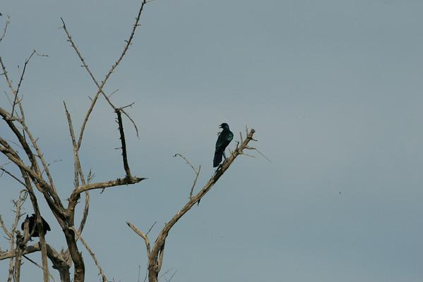 KA6P4160 Botswana, Okavanga, Game Park, Safari
