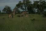 KA6P4360 Botswana, Okavanga, Game Park, Safari