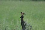 KA6P4179 Botswana, Okavanga, Game Park, Safari
