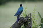 KA6P5587 Botswana, Okavanga, Game Park, Safari