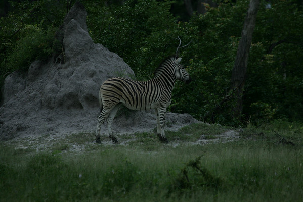 KA6P4394 Botswana, Okavanga, Game Park, Safari