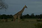 KA6P4348 Botswana, Okavanga, Game Park, Safari