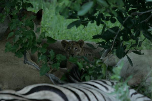 KA6P5725 Botswana, Okavanga, Game Park, Safari
