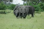 KA6P5116 Botswana, Okavanga, Game Park, Safari