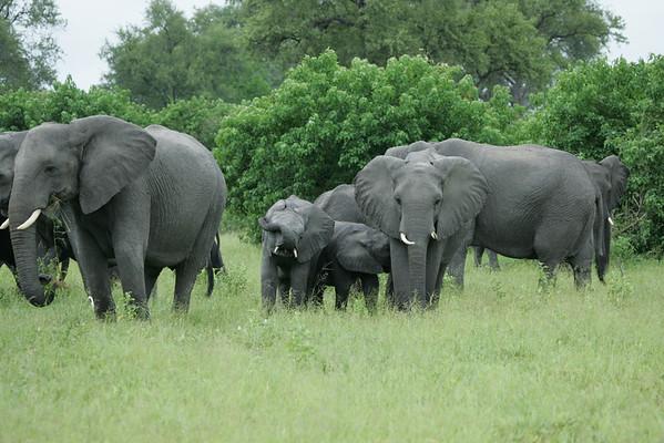KA6P5107 Botswana, Okavanga, Game Park, Safari