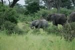 KA6P5086 Botswana, Okavanga, Game Park, Safari