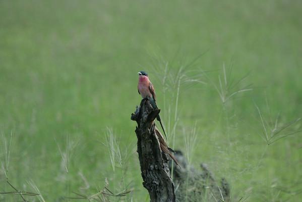 KA6P4183 Botswana, Okavanga, Game Park, Safari