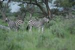 KA6P5437 Botswana, Okavanga, Game Park, Safari
