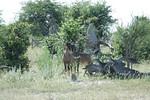 KA6P6872 Botswana, Okavanga, Game Park, Safari