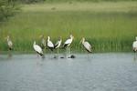 KA6P6411 Botswana, Okavanga, Game Park, Safari