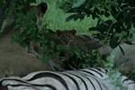 KA6P5723 Botswana, Okavanga, Game Park, Safari