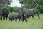 KA6P5118 Botswana, Okavanga, Game Park, Safari