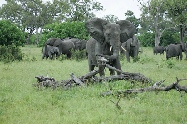 KA6P5094 Botswana, Okavanga, Game Park, Safari