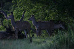 KA6P5834 Botswana, Okavanga, Game Park, Safari
