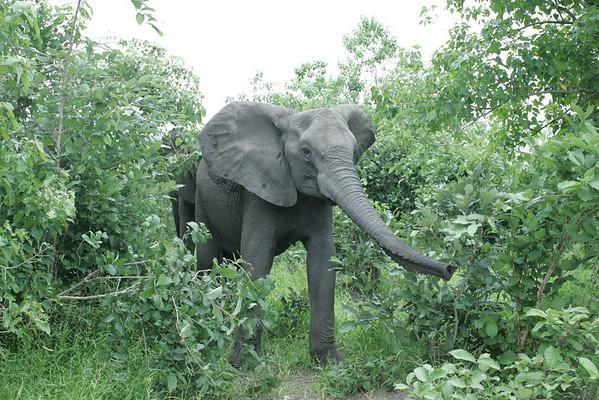 KA6P5314 Botswana, Okavanga, Game Park, Safari