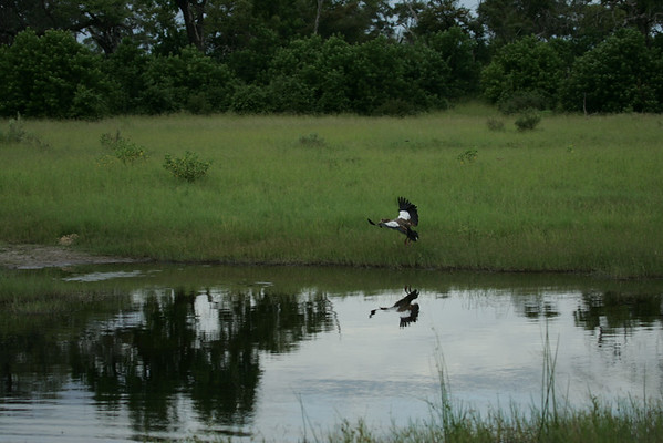 KA6P4374 Botswana, Okavanga, Game Park, Safari