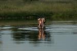 KA6P4331 Botswana, Okavanga, Game Park, Safari