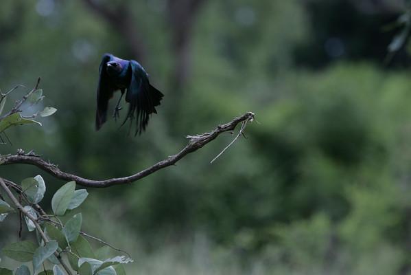KA6P5556 Botswana, Okavanga, Game Park, Safari