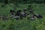 KA6P4495 Botswana, Okavanga, Game Park, Safari