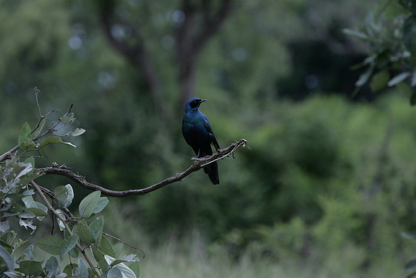 KA6P5543 Botswana, Okavanga, Game Park, Safari