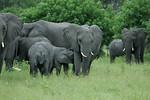 KA6P5115 Botswana, Okavanga, Game Park, Safari