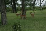 KA6P4524 Botswana, Okavanga, Game Park, Safari