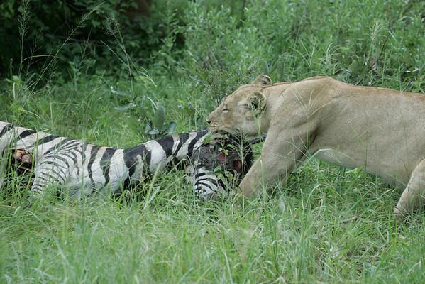 KA6P6078 Botswana, Okavanga, Game Park, Safari