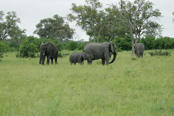 KA6P5120 Botswana, Okavanga, Game Park, Safari